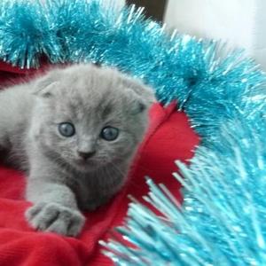 Продаются очаровательные комочки-котята