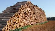 Продажа леса, кругляк хвойных пород и других.